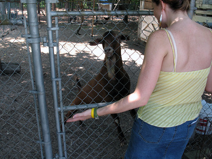 Katie fights the goat