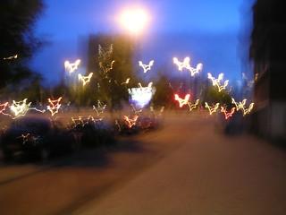 lichtvogels
