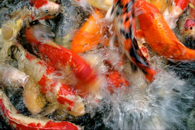 Fish frenzy