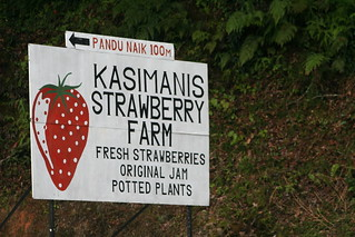 Strawberry Farm | by Phalinn Ooi