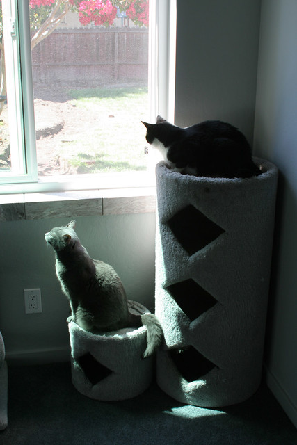 Cats in the Shadows