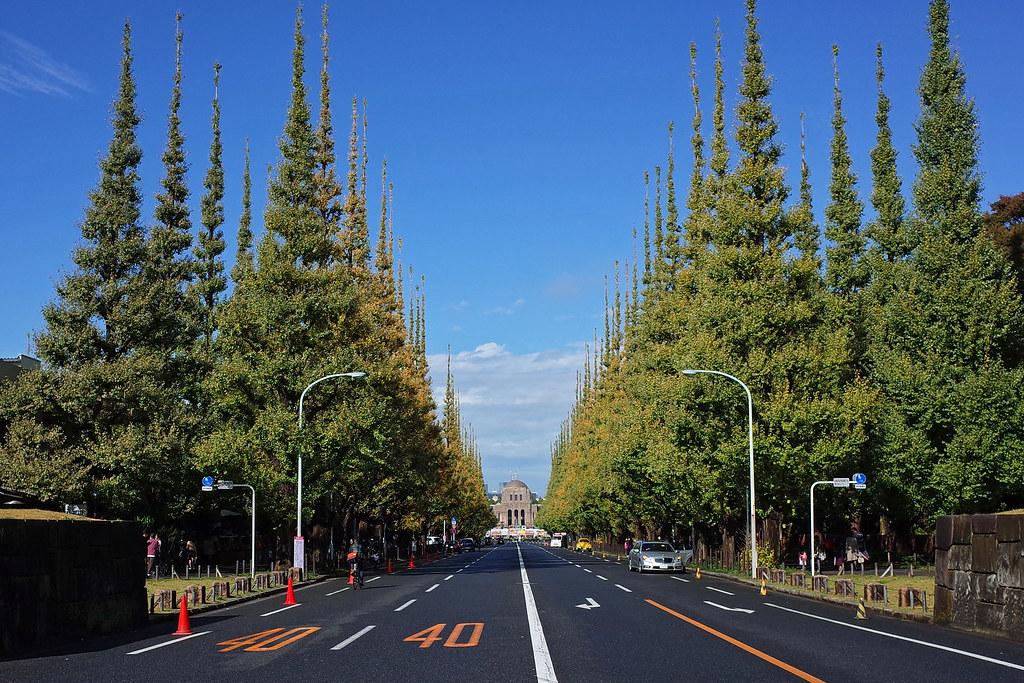 Ginkgo street 2015 Nov. 01