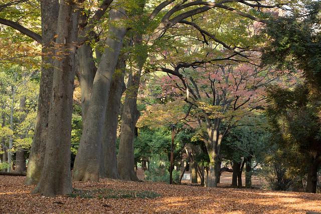 an autumn in Tokyo