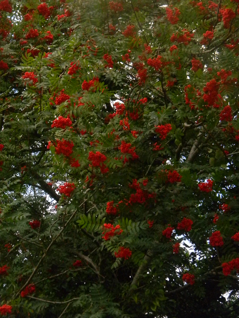 Rowanberries Pulborough Circular
