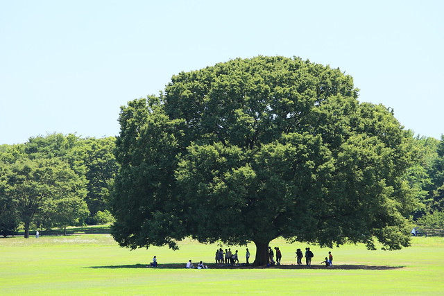 keep themselves cool under a big tree.
