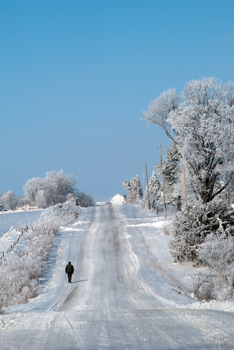 winter white snow cold tree ice fog landscape frozen frost hoarfrost country amish icy frozenfog kalona
