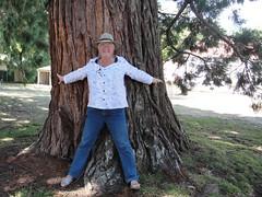 wo, 16/02/2011 - 03:41 - 015. Een Sequoiadendron Giganteum, niet zo oud, van ca. 1890