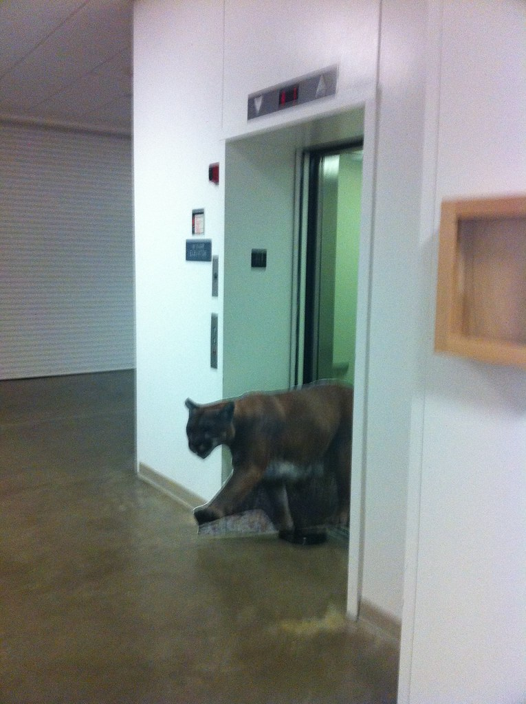 Can a cougar ride an elevator?