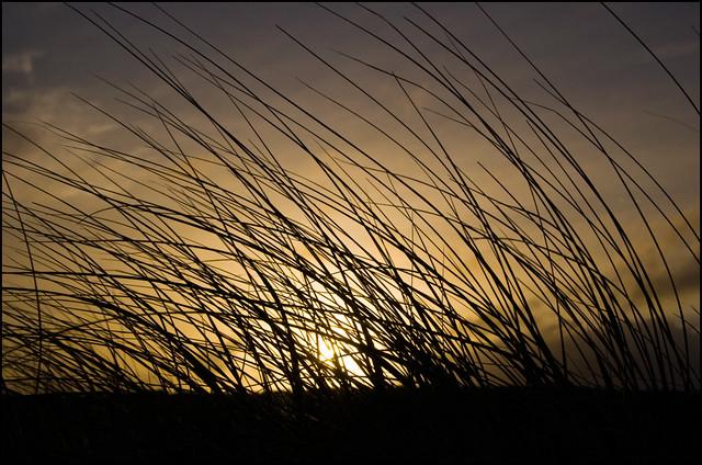 Sunrise through vegetation