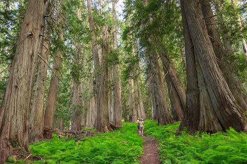 forest idaho stjoenationalforest hobocedargrove idahopanhandlenationalforests