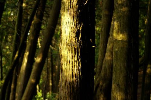 trees woods bark provincialpark sibbald