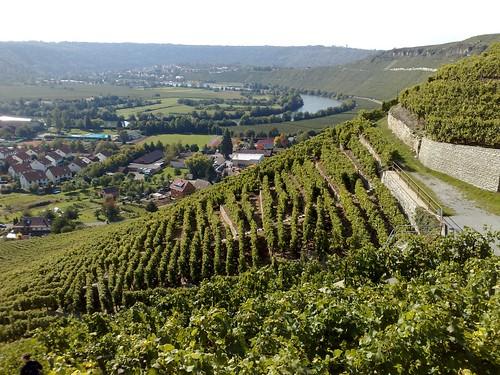 Mundelsheim: Neckarschleife | by globetrotter_rodrigo