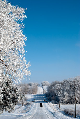 blue winter white snow cold tree ice fog landscape frozen frost hoarfrost country amish icy buggy frozenfog horsebuggy kalona