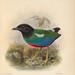 Ornithological miscellany V.2