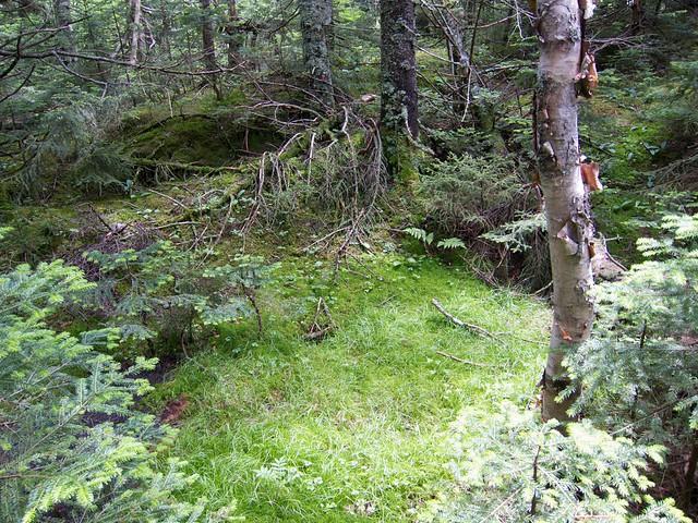 2:39:16 (75%): vermont hiking greenmountains mthunger whiterocktrail mtwhiterock