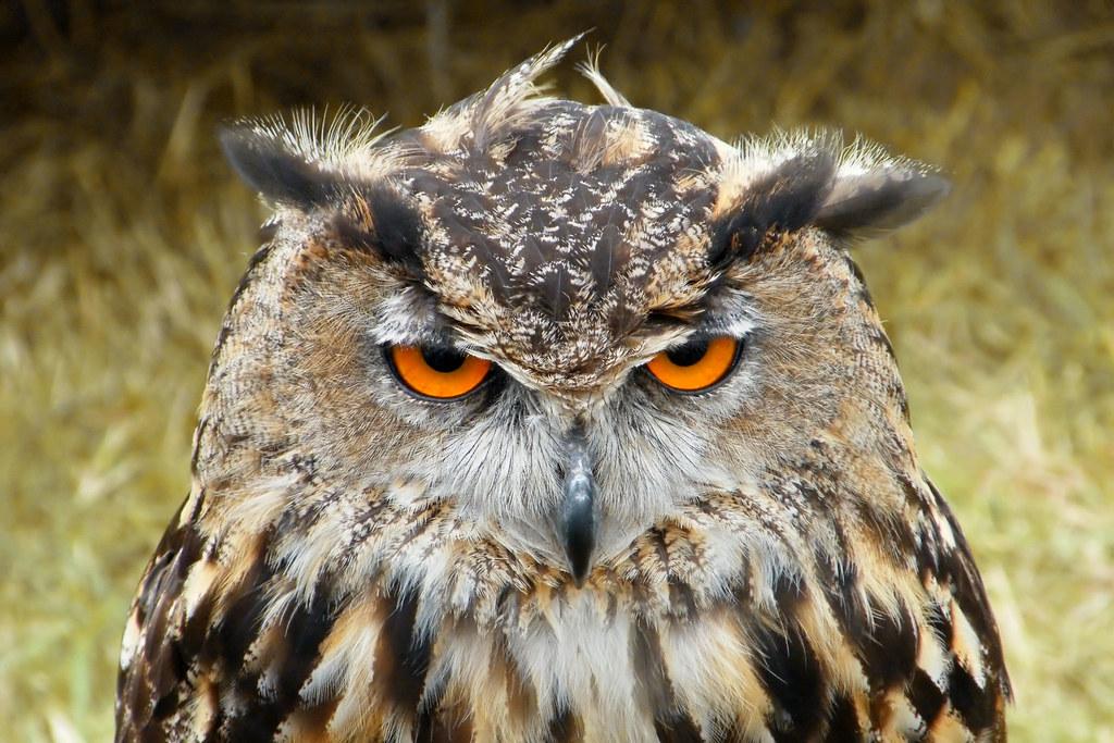 Image result for owl meme