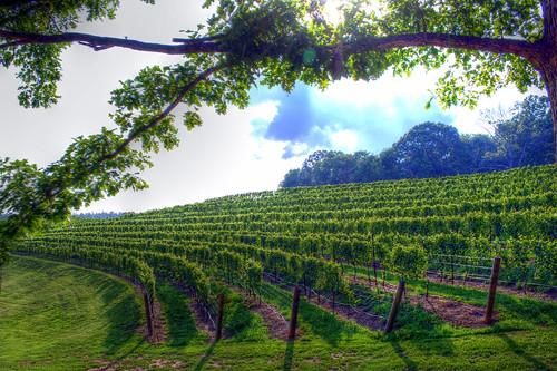 summer usa sunlight mountains georgia vineyard nikon unitedstates winery southern handheld hdr dahlonega grapevine northgeorgia lumpkincounty 3xp photomatix d80 montaluce montalucewinery dahlonegawinetrail