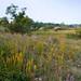 Marshall Prairie