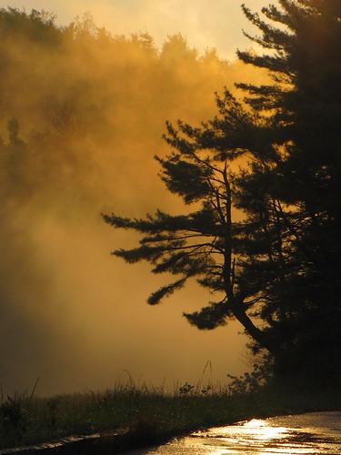 orange cloud tree rain northcarolina blueridgeparkway westernnorthcarolina southernappalachians ccbyncsa elkmountainoverlook canonpowershotsx10is