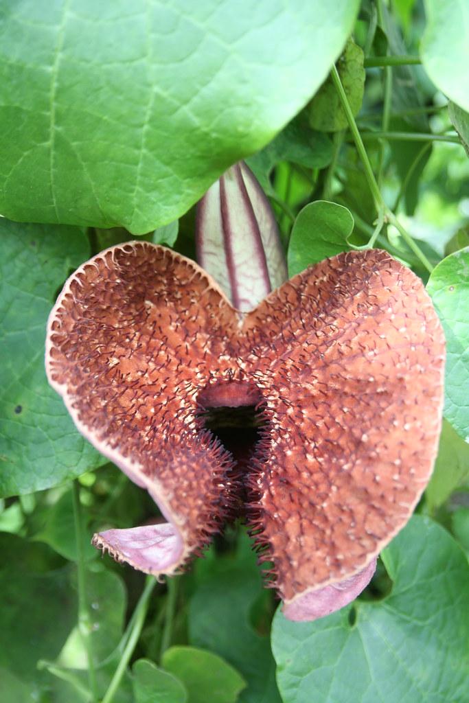 Tình yêu cây cỏ ĐV2 - Page 5 6003034326_40e5074a11_b