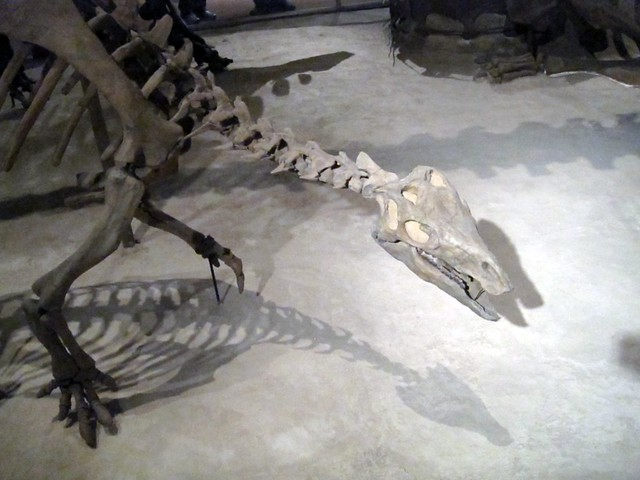 Prehistoric Display at the Smithsonian Natural History Museum
