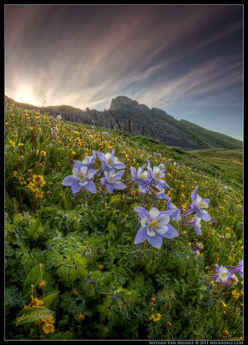 photoshop sunrise landscape colorado silverton glacier clearlake rockymountains columbine wildflowers wildflower sanjuanmountains ridgeway ouray glaciallake coloradowildflowers photomatixpro canon40d