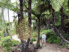 do, 03/02/2011 - 02:30 - 016. Fern tree, varenboom
