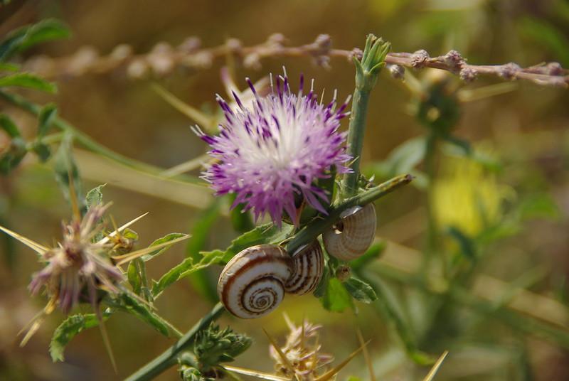 Snails in Azerbaijan