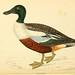 A history of British birds. v.6