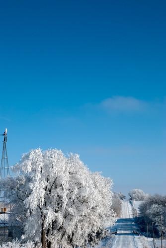 blue winter white snow cold tree ice fog landscape frozen frost hoarfrost country icy frozenfog kalona