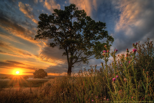 sunset mountain flower tree clouds barn landscape virginia nikon d300 loudouncounty tomlussier