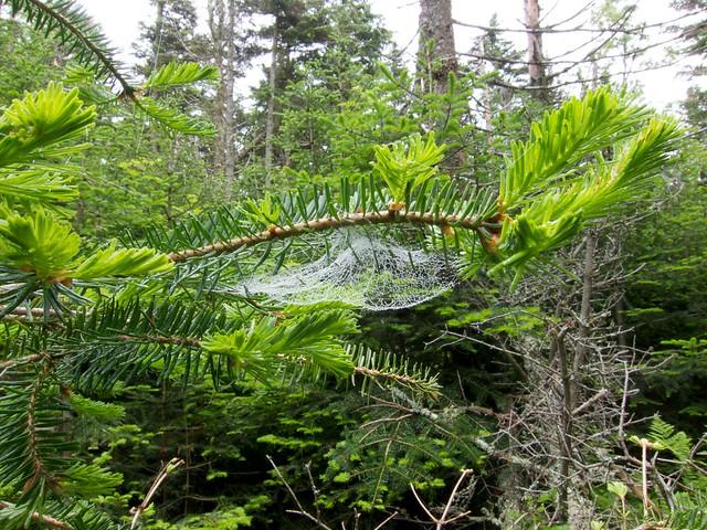 1:14:21 (56%): hiking spiderweb newhampshire whitemountains mtmoosilauke bentontrail
