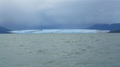 wo, 22/04/2009 - 20:45 - 37_ gletsjer Pius XI maait links en rechts een heel bos weg