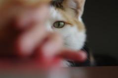 eyeing