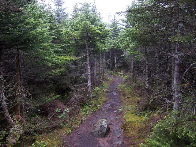 1:40:54 (76%): hiking newhampshire whitemountains mtmoosilauke bentontrail