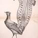 La galerie des oiseaux  t.1
