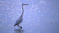 а birds_097