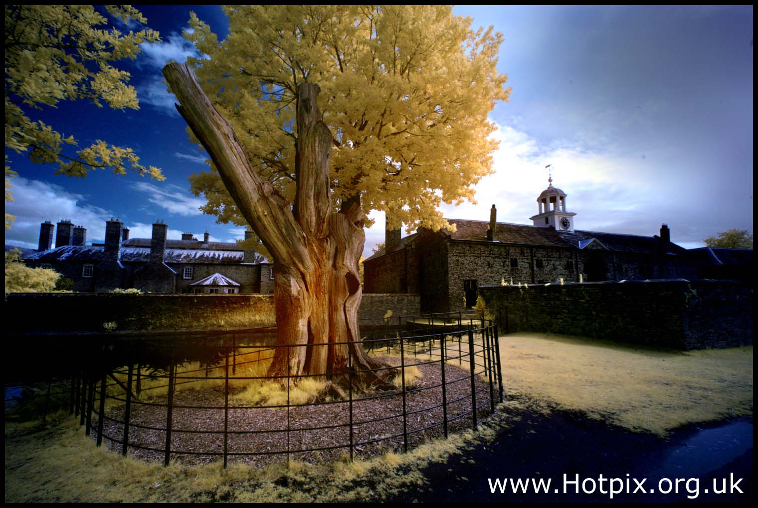 oak,tree,dunham,massey,masey,dunhammassey,NT,national,tust,trust,town,village,property,manchester,altrincham,house,clock,720nm,R72,Hoya,filter,ir,infra,red,infrared,UK,England,britain,tony,smith,tonysmith,hotpix,tonysmithhotpix