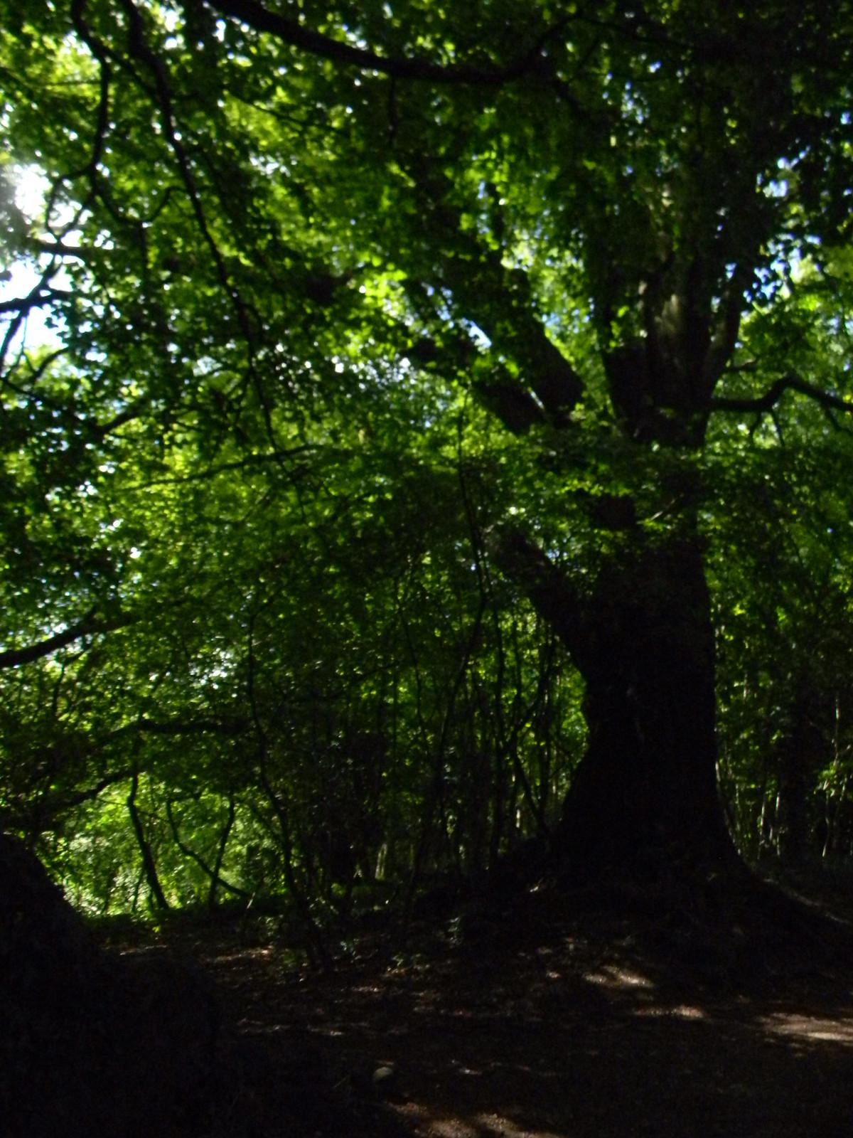 In the woods Merstham to Tattenham Corner