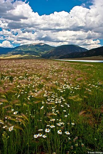 flowers eaglenestlake lake eaglenest mountains sangredecristomountains newmexico plants valley rockymountains unitedstates america usa