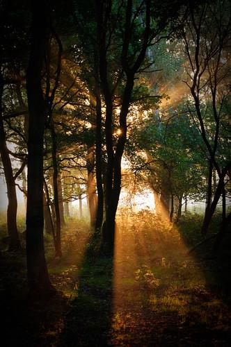 morning flowers trees light sun sunlight forest sunrise woods nikon d90 nikond90