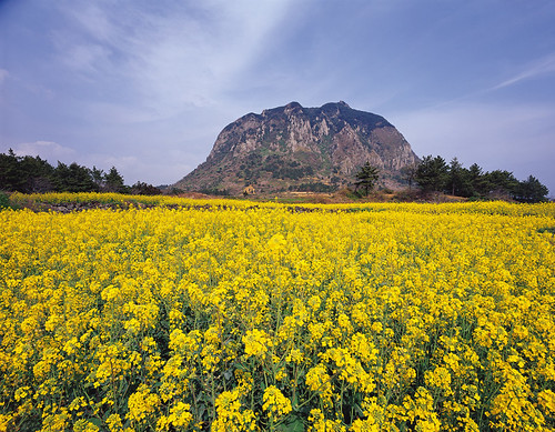 Jeju Island | by KOREA.NET - Official page of the Republic of Korea