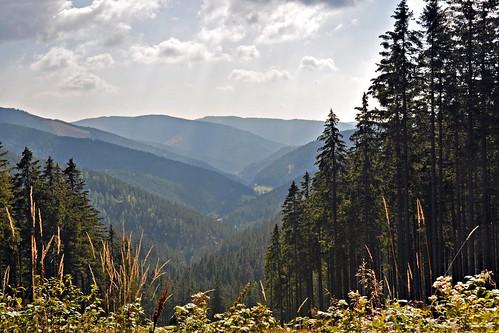 autumn mountain geotagged austria österreich herbst berge niederösterreich loweraustria hochwald highforest feistritzsattel