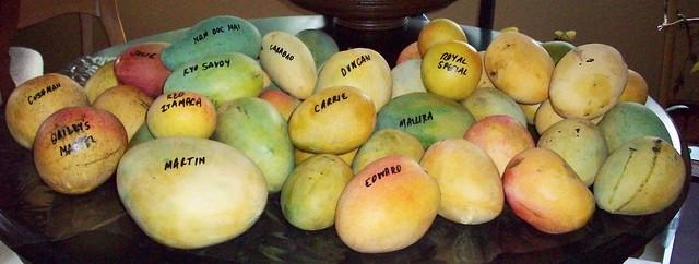 TREC Mangoes 021