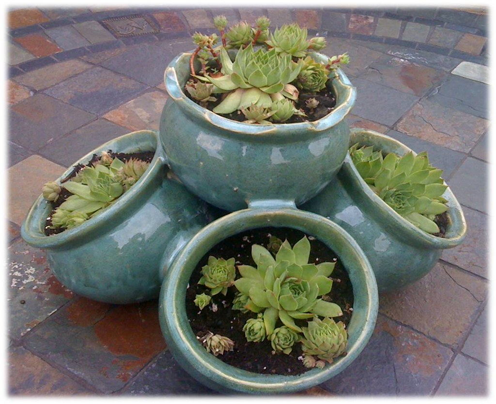 Hens And Chicks Succulent Medley New Planter With Hens And Flickr