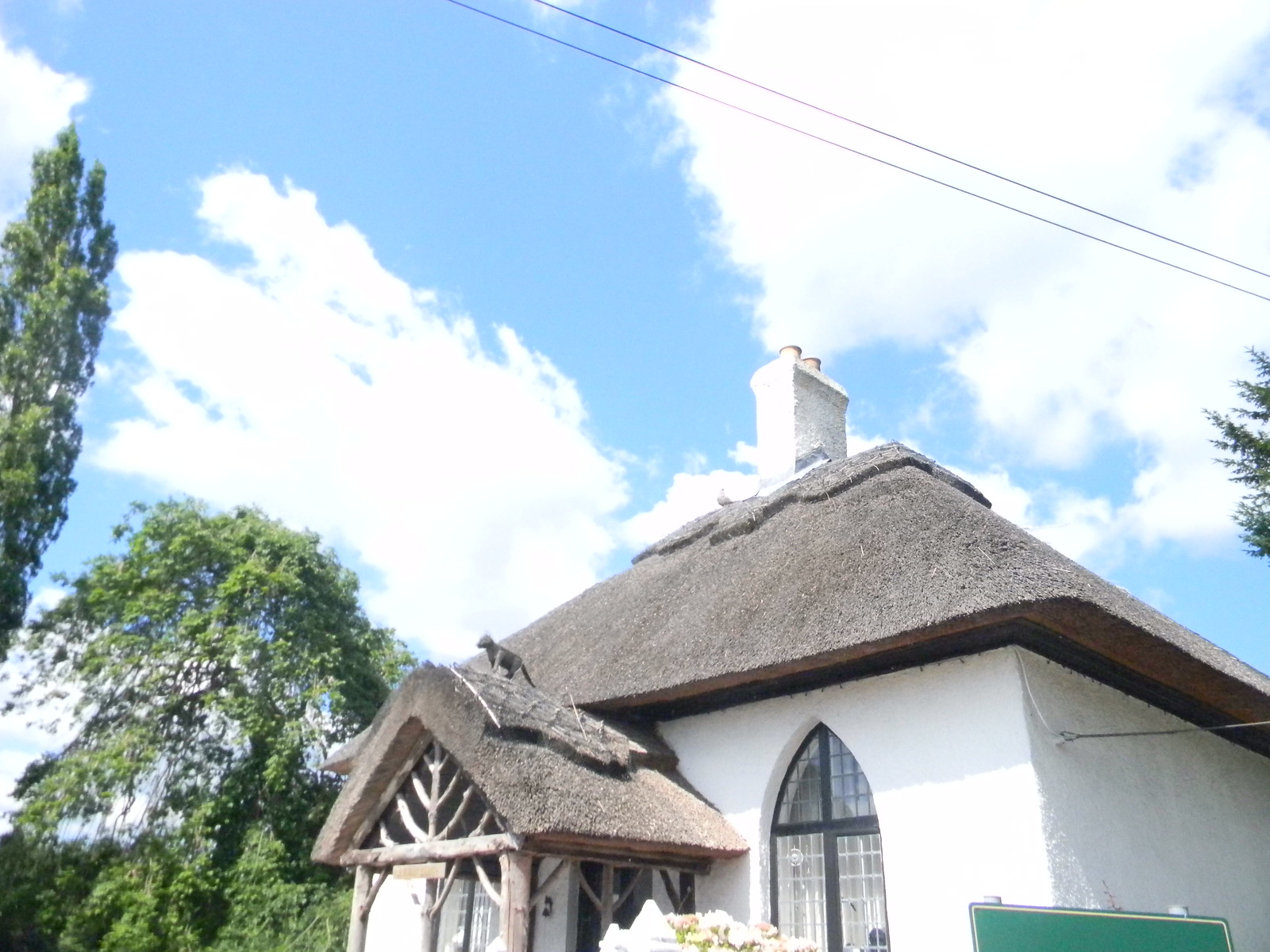 Cat on a hot thatched roof Merstham to Tattenham Corner