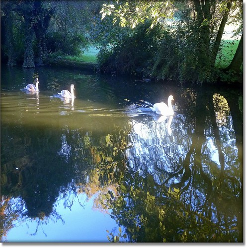 uk trees sunset england sky tree nature field geese duck swan goose fowl hertfordshire grandunioncanal herts apsley wow1 platinumheartaward natureselegantshots 100commentgroup doublyniceshot mygearandmebronze jjamv juliusvloothuis