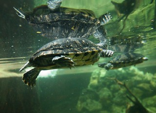 Aquarium (9) | by Michael Panse