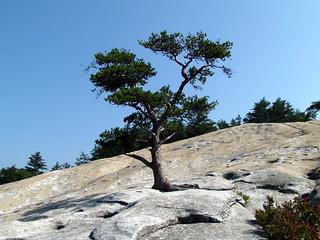 Tree Loop Trail Stone Mountain NC SP 3951 | by bobistraveling