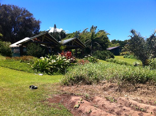 Hawi property | by Zach Hale